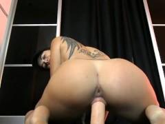 pussy_2047393